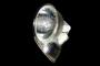 Лампа галогеновая для DL-11 35W 12 Вольт